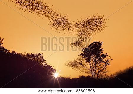 Swarm Of Bats  On Sunset