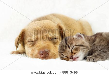 Pets Sleeping On A White Bedspread