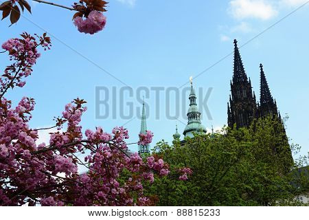 St. Vit Cathedral In Area Of Prague Castle