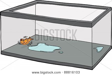 Goldfish Flopping In Empty Tank