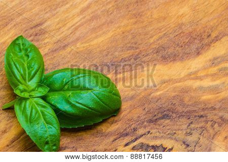 Fresh Basil Leaves On Wooden Table Background