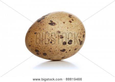 Studio shot of quail eggs