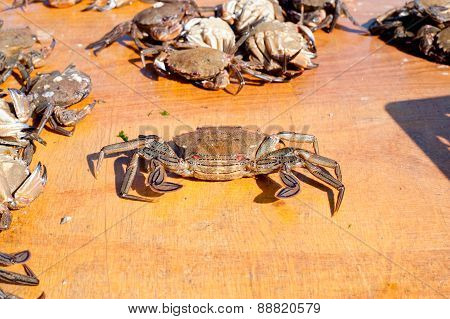 Fresh Crab Caught In The Morning
