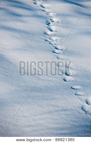 Boot Traces In The Snow In Forest