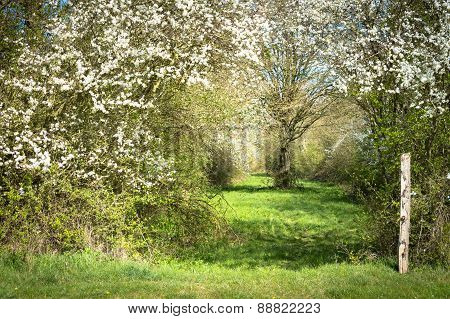English Byway In Springtime