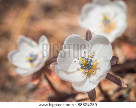 White Ground Flower On Spring Season