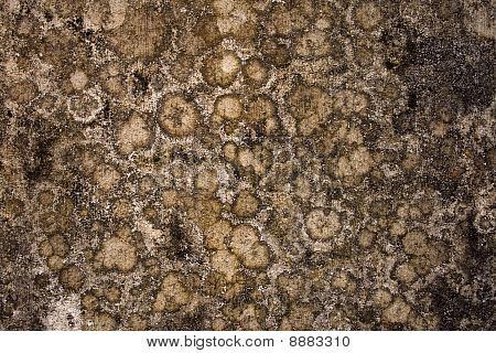 Globular Mold Wall Background With Text Space