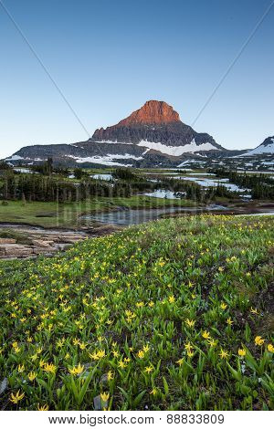 Reynolds Mountain Over Wildflower Field At Logan Pass, Glacier National Park
