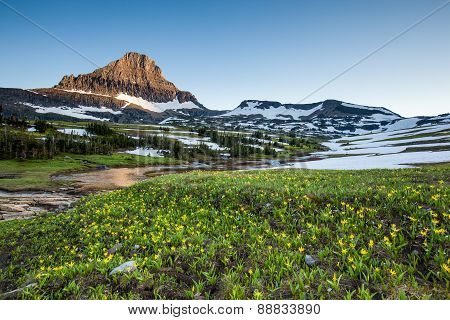 Reynolds Mountain Over Wildflower Field, Glacier National Park