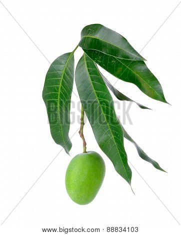 Small Green Mango Isolated On A White Background