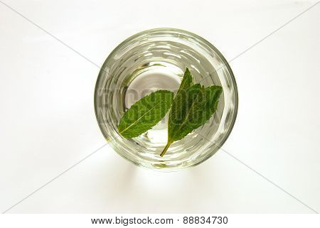 Refreshing Glass of Water Infused With Mint