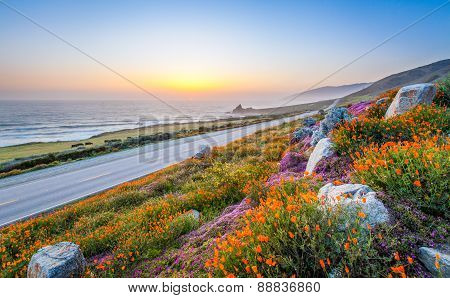 wild flowers and California coastline in Big Sur