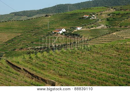 High Douro Valley Wine Region