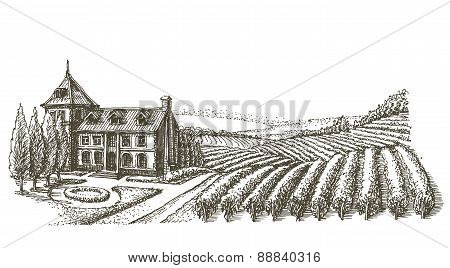 farm, a vineyard, on a white background. sketch