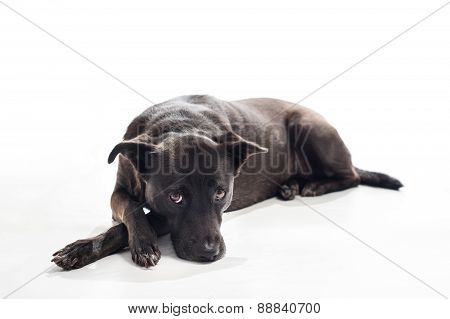 Bored, Black, Mixed-breed Dog