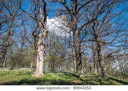 Springtime in Sweden