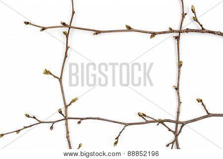 Spring branch.
