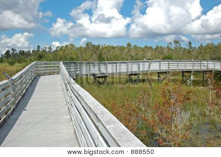 Boardwalk In Swamp Nature Preserve