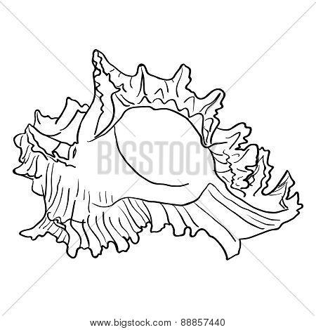 Marine hand drawn shell.