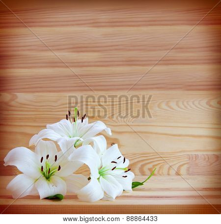 White Lilies Isolated .