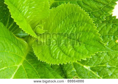 Green Plant Leaves.