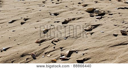 adriatic sea shells with sand as background