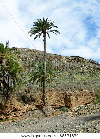 he oasis Barranca de la Madre of Ajui