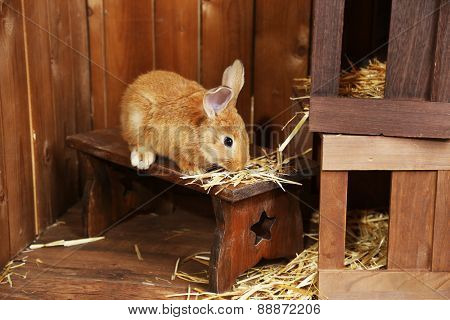 Cute rabbit in barn, close up