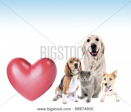 Cute pets with big heart on light background