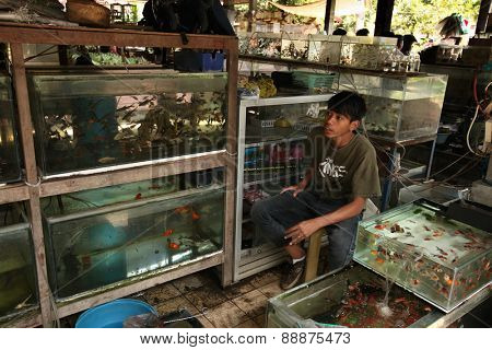 YOGYAKARTA, INDONESIA - JULY 31, 2011: Vendor sells aquarium fishes at the Pasar Ngasem Market in Yogyakarta, Central Java, Indonesia.