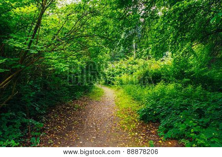 Beautiful Alley In Park. Garden Landscaping Design