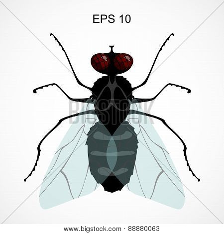 illustration of a fly