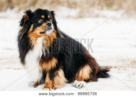 Black And Brown Colors Dog Outdoor Portrait