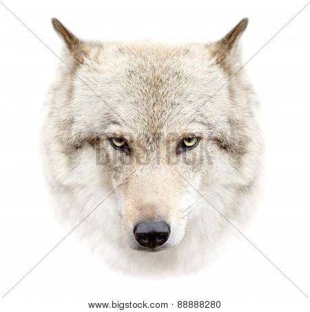 Wolf Face On White Background