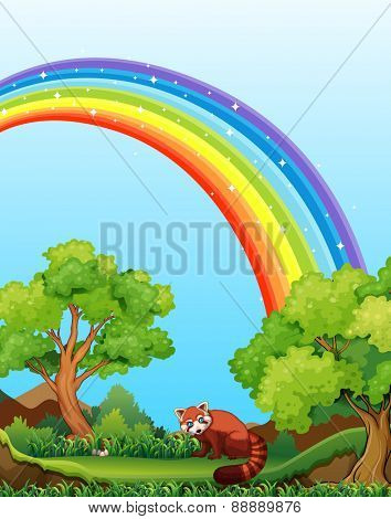 Red panda in the field with rainbow over it