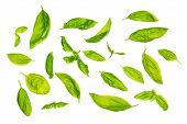 stock photo of basil leaves  - Overhead view scattered fresh sweet basil leaves - JPG