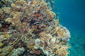 stock photo of sea fish  - Underwater landscape - JPG