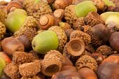 pic of acorn  - A close up of a pile of acorns - JPG