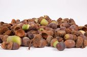 stock photo of acorn  - A pile of acorns isolated on a white background - JPG