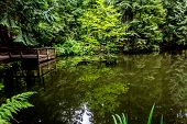 stock photo of dock a pond  - Fishing Pond Hidden in the Dark Rainforest of North America - JPG