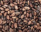 picture of cocoa beans  - Cocoa beans background Food backgrounds and textures - JPG