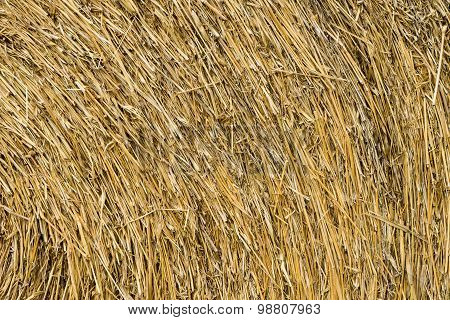 Dry Chaff Background