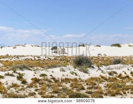 Plants in the Dunes