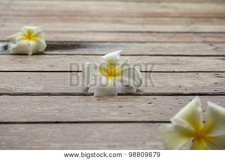 Plumeria Flowers On Wooden Floor