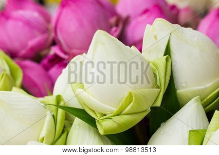 Folded Petal Water-Lily for paying respect to Buddha in Thailand