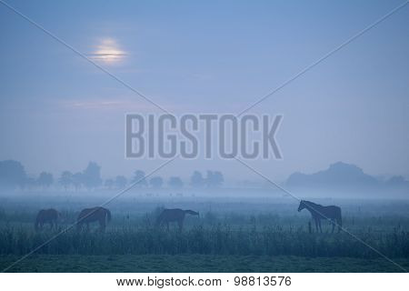 Horse Silhouette In Dusk