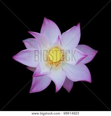 Lotus Isolated On Black Background