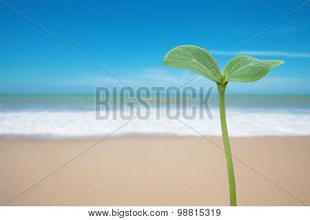 Tree Seedling On Beach