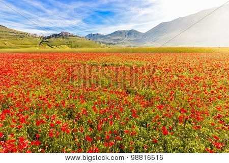 Fioritura at Piano Grande with Castelluccio, Umbria, Italy