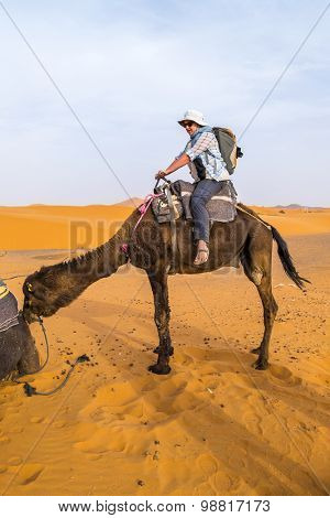 Dunes Erg Chebbi near Merzouga, Morocco - female tourist prepares for ride on camel into the erg